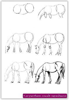 How to draw a horse pencil. Lesson №17