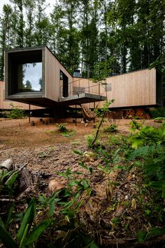 Florian Busch embeds branch-shaped holiday home in Japanese forest Forest Floor, Forest House, Concrete Steps, Concrete Floors, Shade Screen, Forest Pictures, Villa, Timber House, Front Entrances