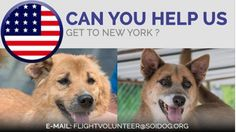 Are you departing from THAILAND and flying to NEW YORK USA? Please help us get adopted dogs to their homes! We organize everything and there is NO COST to you. Previous flight volunteers have described it as the most rewarding experience of their lives! EMAIL flightvolunteer@soidog. http://www.soidog.org/en/be-a-flight-volunteer