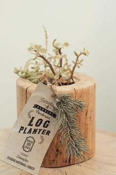 Log planter with succulent as a gift
