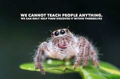 We cannot teach peop...