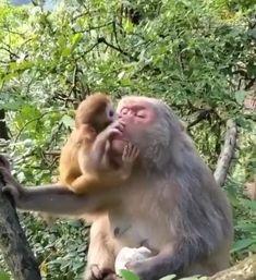 Monkey, Animals, Animales, Monkeys, Animaux, Animal, Animais