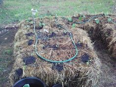 info on straw bale gardening, curing the hay prior to planting and using a tarp . info on straw ba Straw Bales, Hay Bales, Gardening Hacks, Urban Gardening, Hay Bale Gardening, Garden Poems, Raised Garden Beds, Raised Beds, Garden Club