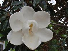 Like porcelain | Watching NOLA Nature