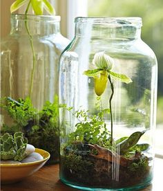 Today we look at ways to make your very own unforgettable bonsai terrarium plants. The picture Bonsai Terrarium plant here offers you a sense of the scale, and we're sure you want to have it for your home decor. Garden Plants, Indoor Plants, Small Plants, Plants In Jars, Indoor Orchids, Indoor Cactus, Nature Plants, Fruit Garden, Tropical Garden