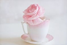 Items similar to Still Life Photography - Flower Rose Pastel Photo Shabby Cottage Decor Pink White Romantic Print Vintage Tea Cup Still Life Photo English on Etsy Pink Day, Rose Photos, Kawaii Shop, Favim, Still Life Photography, Nice Photography, Flower Photography, Cottage Chic, White Cottage
