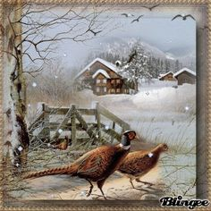 Fasane im Winter