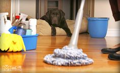 MCS Contract Services understands the cleaning needs of London-area businesses, and we know how important cleanliness is in an office environment. Hiring professionals to handle routine cleaning and maintenance needs protects businesses, employees and reputations. That's why our company specializes in handling the office cleaning needs of businesses in Islington, Central London and the surrounding boroughs. http://www.mcscontracts.co.uk/