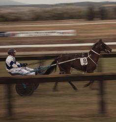 Harness racing at Rangiora Horsetrack in New Zealand Harness Racing, Adventure Photography, New Zealand, Van, Horses, Photo And Video, Animals, Instagram, Animales