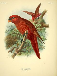 Antique bird illustration from 1896