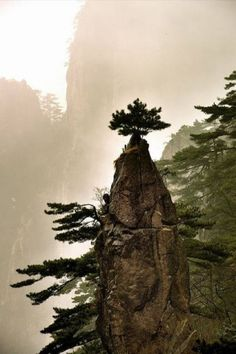 :-D Huangshan, China. Another tree I hope you don't fall out of! Bonsai, Beautiful World, Beautiful Places, Timor Oriental, Jolie Photo, Historical Sites, Beautiful Landscapes, Photos, Pictures