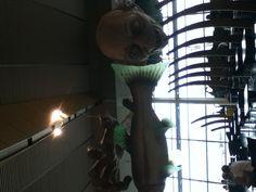 GOLLUM!!! At Wellington airport, :)