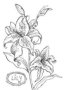 цветы карандашом рисунки - Поиск в Google