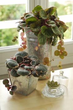 tillandsien auch luftpflanzen genannt leben von luft und liebe pflegeleicht und einzigartig. Black Bedroom Furniture Sets. Home Design Ideas