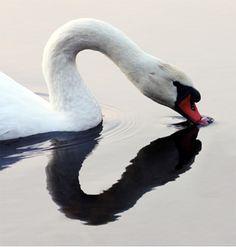 Dit is vorm-restvorm, want de zwaan zelf is vorm, en het hartje is restvorm, die valt niet zo snel op