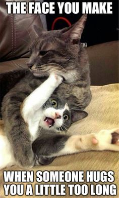 Cats and kittens are so funny and cute animals, they are simply the best! Just look how all these cats & kittens play, fail, get along with dogs, get their Animal Humour, Funny Animal Memes, Cute Funny Animals, Funny Animal Pictures, Funny Memes, Funniest Animals, Funny Quotes, Cat Quotes, Lol Funny
