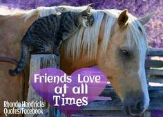 cats and horses photos - Bing images Animal Gato, Amor Animal, Animal Hugs, Horse Pictures, Animal Pictures, Cute Pictures, Animals And Pets, Funny Animals, Cute Animals