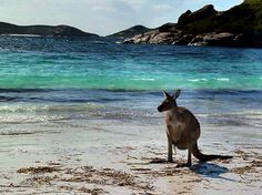 Lucky Bay, Esperence WA  Can't wait to visit my brother and his family in Australia next year :)