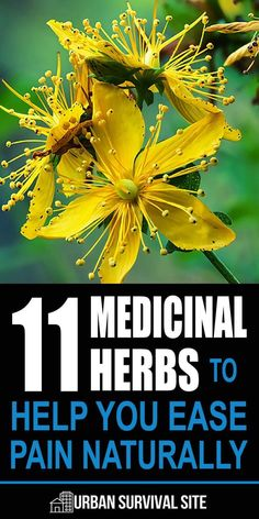 Natural Holistic Remedies 11 Medicinal Herbs To Help You Ease Pain Naturally - These medicine herbs are natural painkillers. There's nothing as strong as Vicodin on this list, but they can at least make the pain more tolerable. Natural Health Remedies, Natural Cures, Natural Healing, Herbal Remedies, Natural Treatments, Natural Foods, Cold Remedies, Bloating Remedies, Holistic Healing