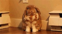 How could you anyway? | Community Post: Why Bunnies Make Horrible Pets