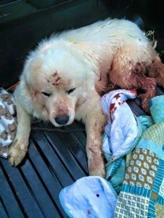 Prosecute Thug That Destroyed Dog By Using Him As Target Practice! | PetitionHub.org