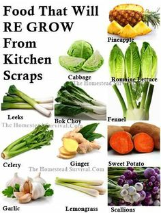 16 Kitchen Scraps That You Can Re-grow
