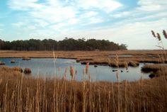 Cattus Island Park, Toms River, NJ Cost: Free