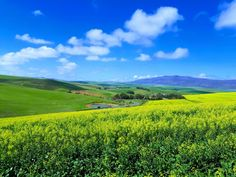 Situated on a working farm in the Overberg Region outside of Caledon, Oudekraal is a restored family homestead with 4 bedrooms. Two Rivers, Local Attractions, Sit Back And Relax, Kids Sleep, Nature Reserve, Common Area, Adult Children, Hiking Trails, South Africa