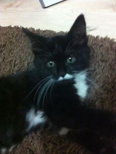 Adı : Paspas Irkı : Ankara Kedisi (Angora) Cinsiyet : Dişi Kedi