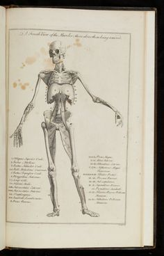 Bernhard Siegfried Albinus: Tabulae sceleti et musculorum corporis ...