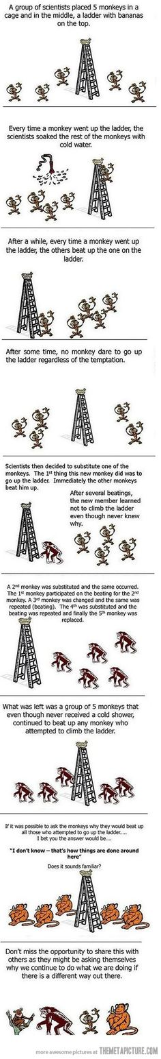 Why things are done the way they are - Monkey experiment. Ask why?