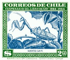 Antique 1948 Chile Praying Mantis Postage Stamp,mantis,Mantodea,praying,patagonia,chile,chilean,fauna,antique,postage,stamp,naturalist,mail,ephemera,philately,entomology