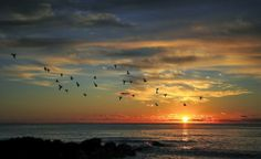 (via 500px  Taking Flight At Sunrise By Scott Miller)