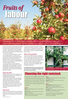 Fruits of labour ~ How to create your own successful orchard... #locallife #Farnham #Surrey #gardening #inspiration #ideas