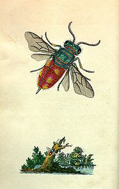 Penn Special Collections - Hollin exhibit - Donovan-Insects