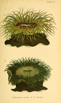 (1890)  Corals and coral islands by James Dana / - Biodiversity Heritage Library