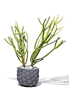Chen Chen & Kai Williams 'Stone Fruit: Pineapple' Planter available at #Nordstrom