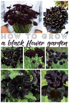 Bring a little drama to the outdoors this summer with a unique and magical looking black flower garden! Get started with these gardening tips and flowers! gardening tips How to Grow a Black Flower Garden - Living La Vida Holoka Olive Garden, Black Garden, Garden Types, Garden Care, Small Gardens, Outdoor Gardens, Outdoor Plants, Outdoor Flowers, Organic Gardening