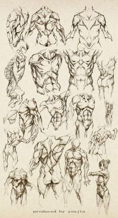 Anatomy study of a male - Male Torso - drawing reference Human Anatomy Drawing, Human Figure Drawing, Anatomy Study, Body Anatomy, Figure Drawing Reference, Body Drawing, Anatomy Reference, Art Reference Poses, Arm Anatomy
