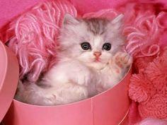 gatitos chiquititos y lindos - Buscar con Google