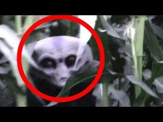 Ghost Or Alien Caught On Camera | Scary Videos | Most Haunted Video | Paranormal Activity - YouTube