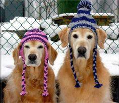 Cute dogs in cute winter hats!  Chloe & Forrest, Halifax Nova Scotia Photo Credit: Elizabeth Gaudreau