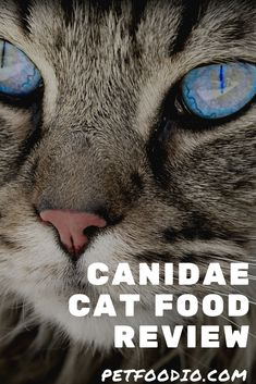 Healthy Cat Food, Sources Of Carbohydrates, Cat Reading, Cat Lovers, Cats, Gatos, Cat, Kitty, Kitty Cats