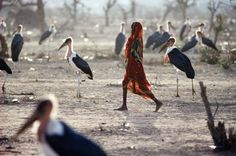 Girl and marabou storks