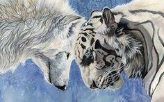 Wolf Vs Tiger Kunst, weiße Wolf und tiger