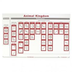$45 BUY - Animal Kingdom Chart & Cards - 42 animals, 11 phyla descriptions, plastic chart; Montessori Services/In-Print