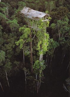 """New Guinea - """"Las casas de Kombai y Korowai de la gente de Irian Jaya se construyen tan alto como 150 pies para ver los pájaros y las montañas y detener a los hechiceros de trepar las escaleras."""""""