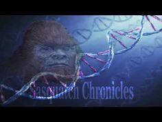 Sasquatch Chronicles SC EP: 116 Reported Sasquatch Sounds [Bigfoot Hotsp...