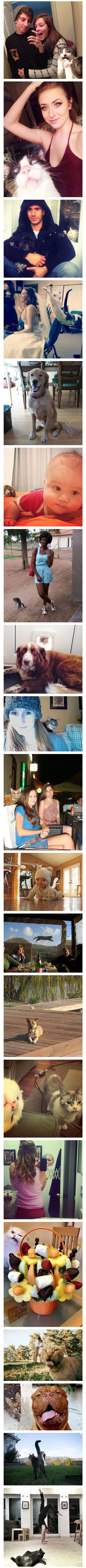 Creeps lol 20 Funny Cat Photobombs To Make You Smile - MyFunnyPalace