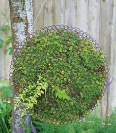 A Cool Moss Orb Is Fashioned From Two Shallow Metal Ornaments Wired  Together With Moss Sheets · Growing MossMoss GardenFlowers ...
